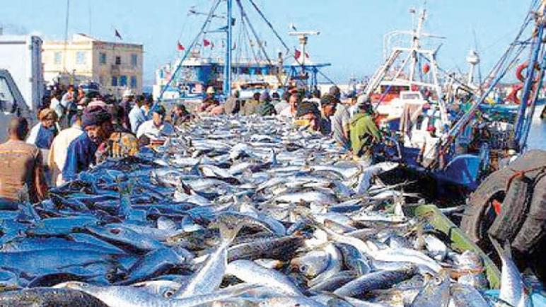 آسفي حماية الثروة السمكية من الاستنزاف!!
