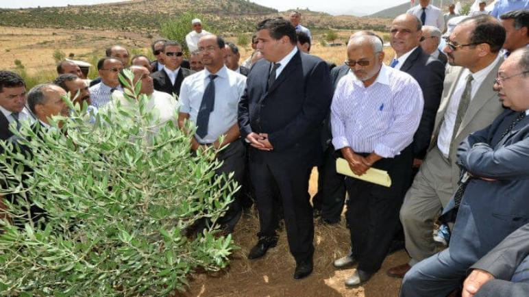 مامدى تتبع مديرية الفلاحة لسقي الزيتون بإقليم أسفي …