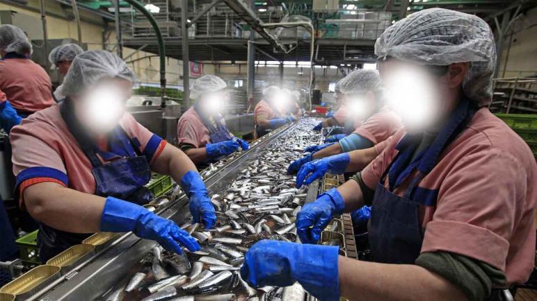 أسفي : هل تحترم معامل تصبير السمك بأسفي المعايير البيئية