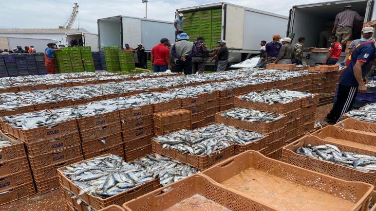 شلل بميناء الصيد بآسفي والمهنيون يتهمون المديرية الجهوية للمكتب الوطني للصيد بتجاهلهم .